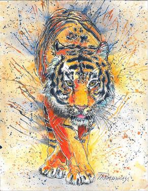 Bodda Getta Tiger with Navy Stripes