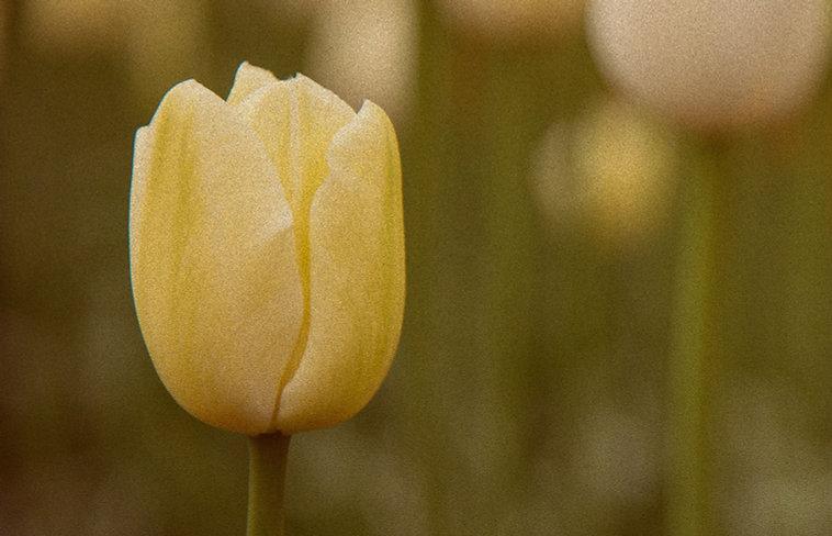 tulip joint, Coffeeshop Smokerdam in Amsterdam Oud-Zuid