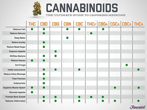 Cannabinoids-The-Only-Infographic-You-Ne