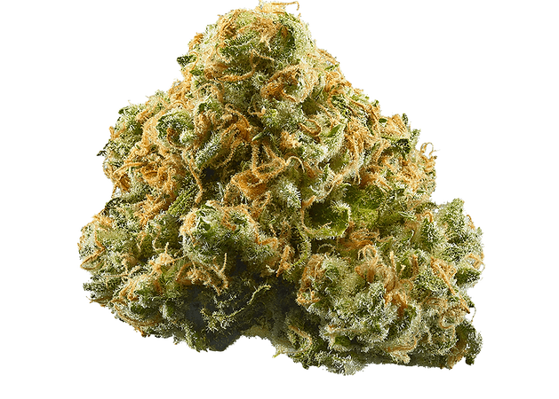 Pineapple Express Hybrid strain  | Coffeeshop Smokerdam | Amsterdam Oud-Zuid