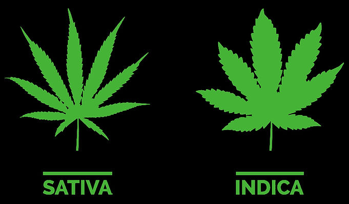 difference sativa and indica Coffeeshop Smokerdam in Amsterdam Oud-Zuid