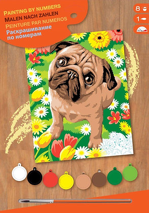 Pug - Paint By Numbers