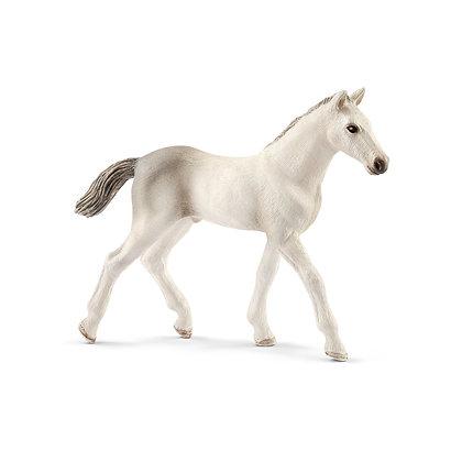 Schleich Holsteiner Foal - 13860