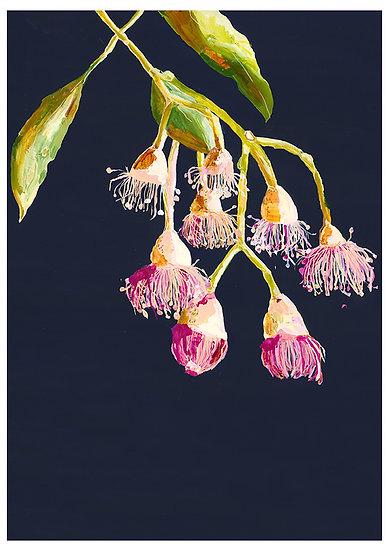 Grotti Lotti Card - Flowering Gums
