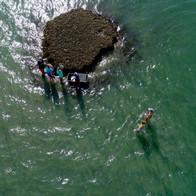 Oyster reef sampling