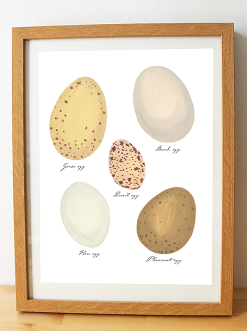 Collection of Eggs – Art Print