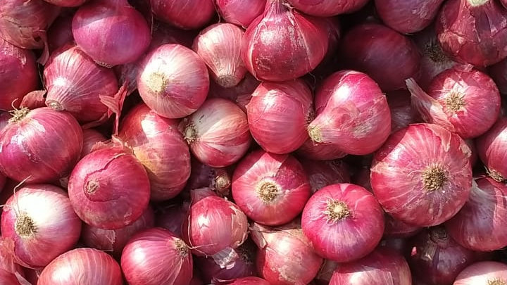 55mm Red Onion