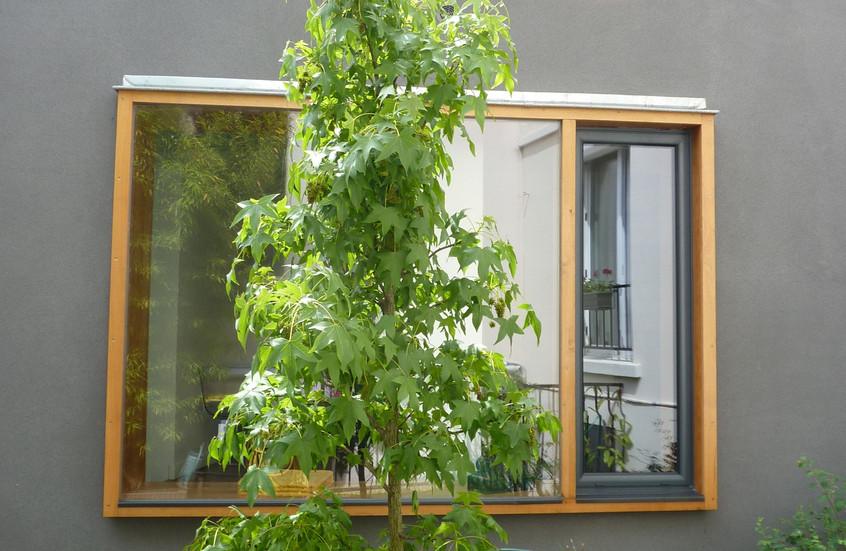L'arbre planté sur l'ancienne cour