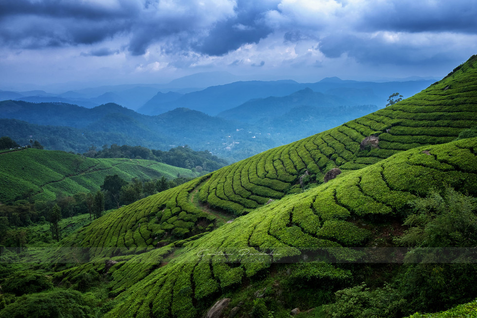 Beautiful landscape photograph from South India with tea gardens at Munnar