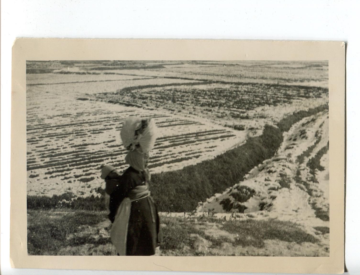 kron016