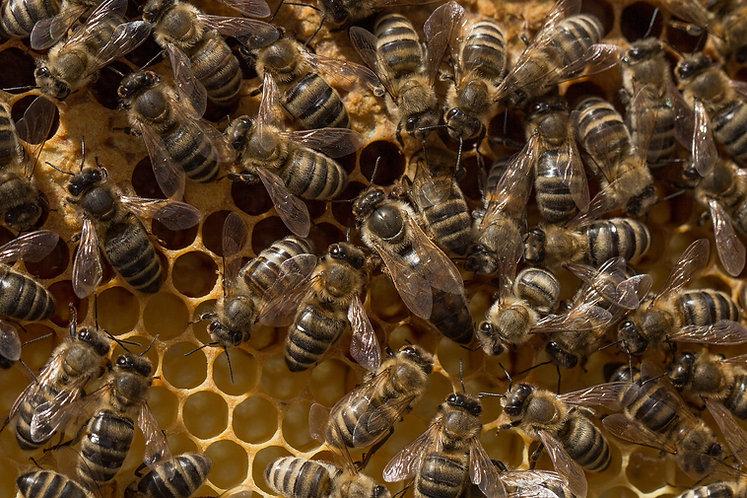 beehive-3286974_1920.jpg