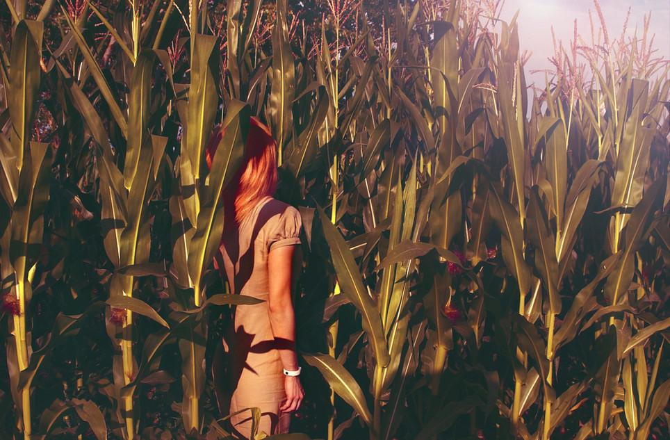 kukoricas.jpg