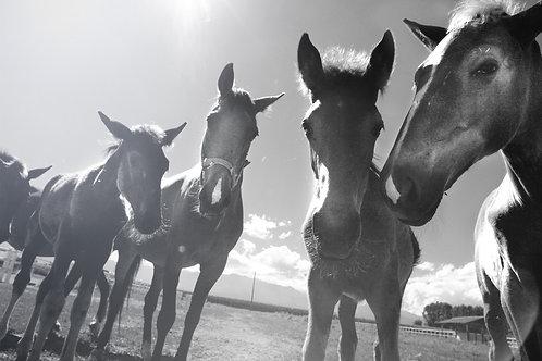 Horse Baes