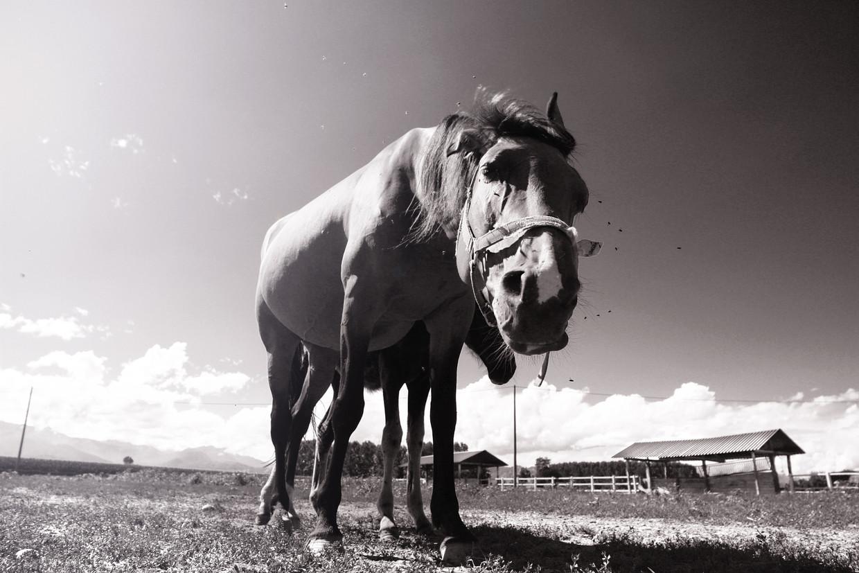 horsebae.jpg