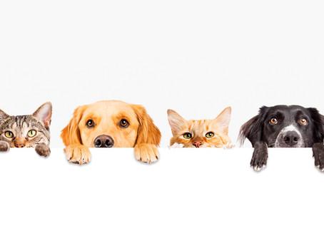 Sessão de Fitoenergética para Você e seu Pet