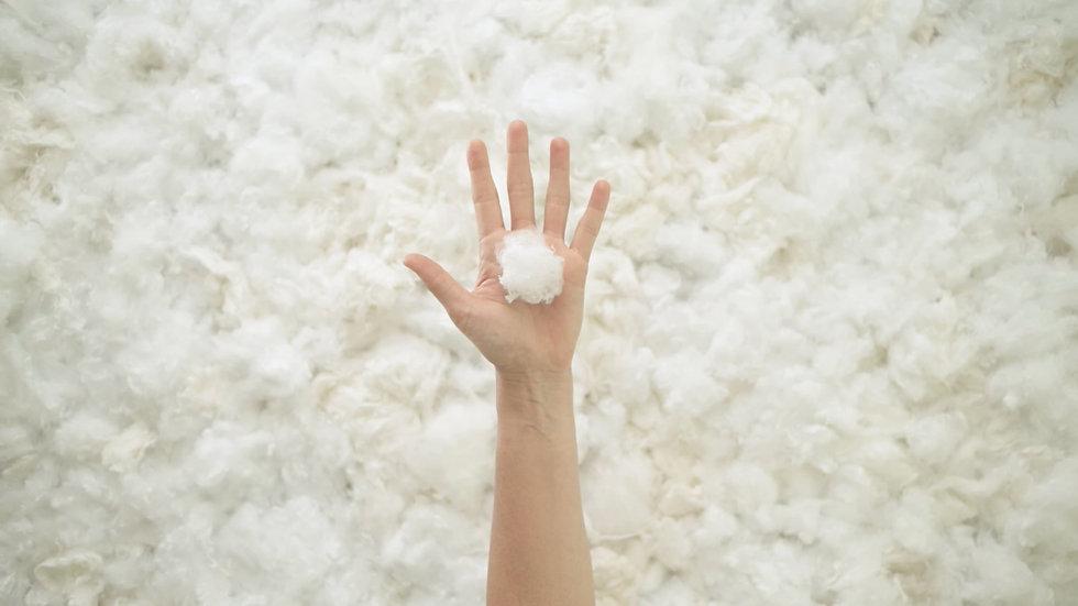 cotton-in-hand.jpg