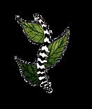 Logo GO OSTÉO