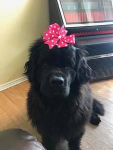 Daisy's 2nd Birthday