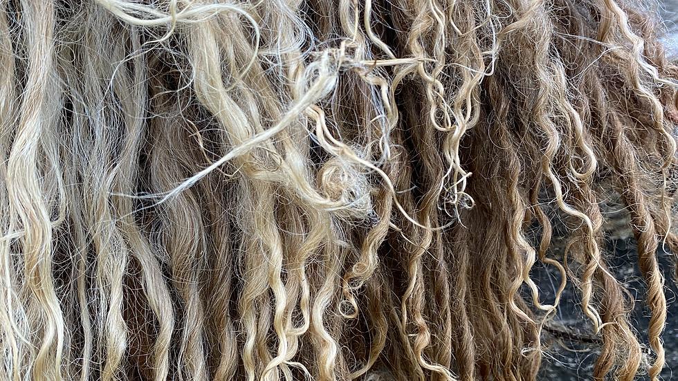 AMMONITE -  Wild Tanned Organic Heritage Breed Sheepskin