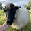 Thumbnail: Woolly Mammoth