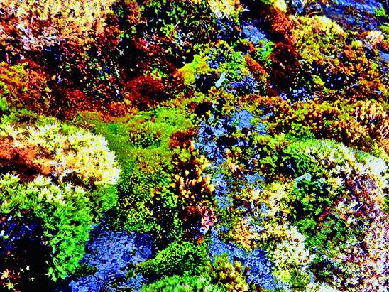 Forrest Coral Reef.jpg