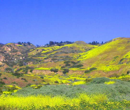 Flowers on The Hill.jpg