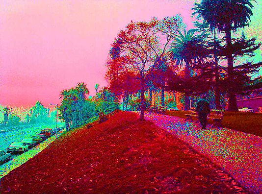 Walk in the Park.jpg