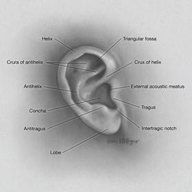 Anatomy of the External Ear (Pinna)