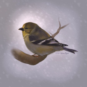 Snowy American Goldfinch