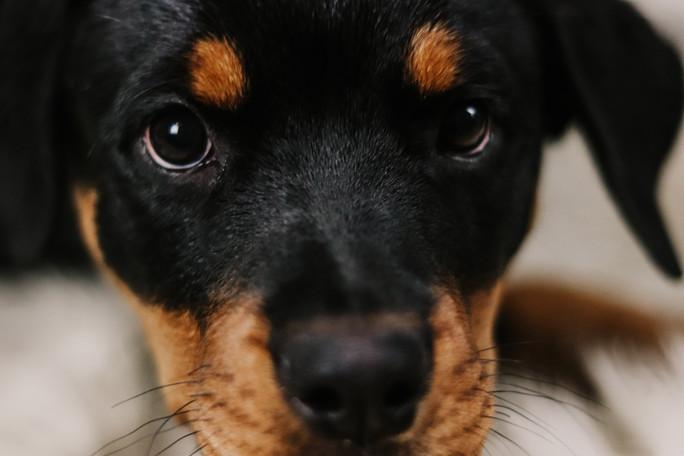 Puppy Photoshoot - Nala