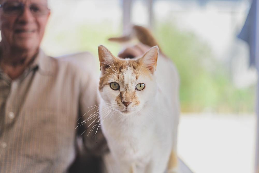 Harley male domestic cat.