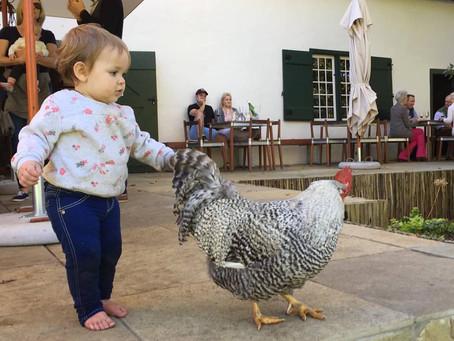 Child friendly wine estates in Constantia.