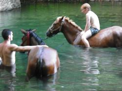 WATER ANIMAL WHISPERING