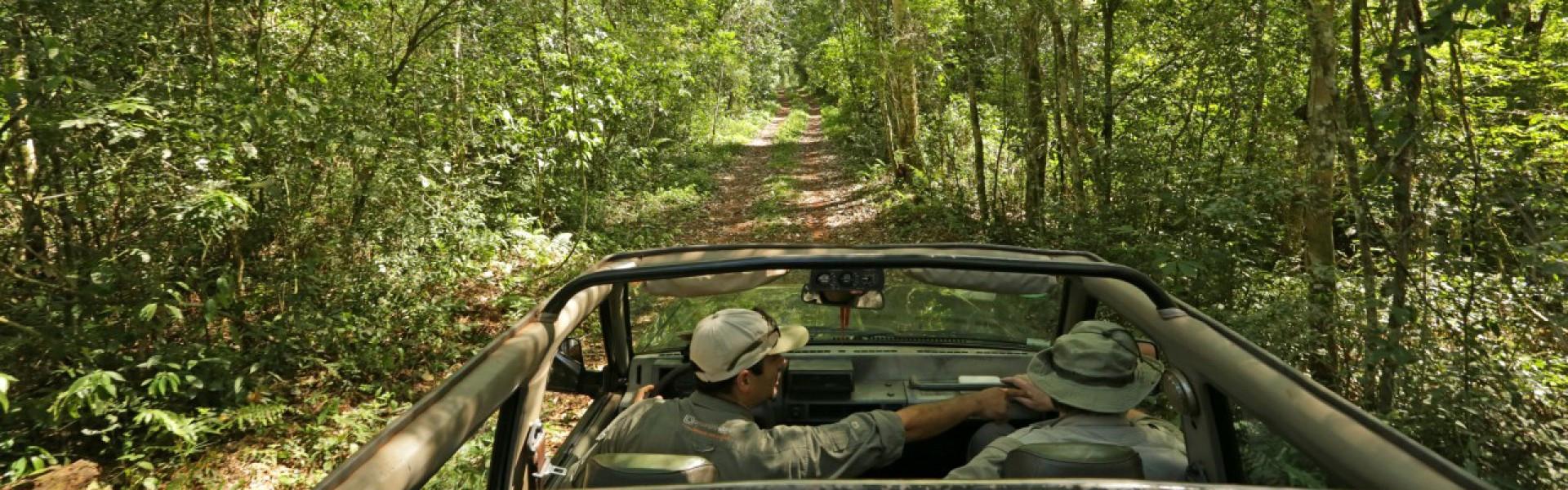 Safaris por el Parque Nacional Iguazú