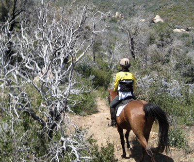 San Diego Horse Trails