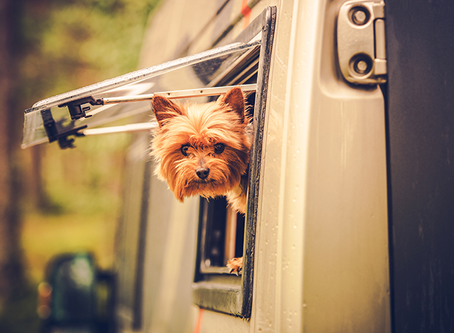 Good Ideas for RV Travel with Pets
