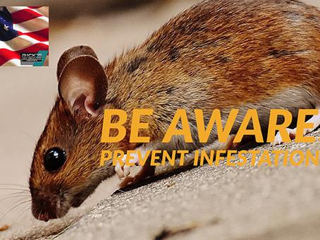 Rodent Infestations Damage
