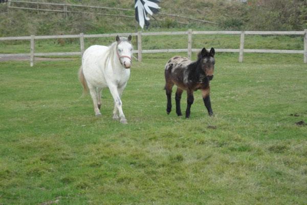 Tettenhall Sanctuary For Horses