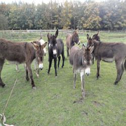 Donkey Sanctuary Tettenhall