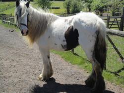 The Horse Sanctuary Tettenhall