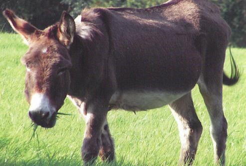Billy Wilson Horse Sanctuary