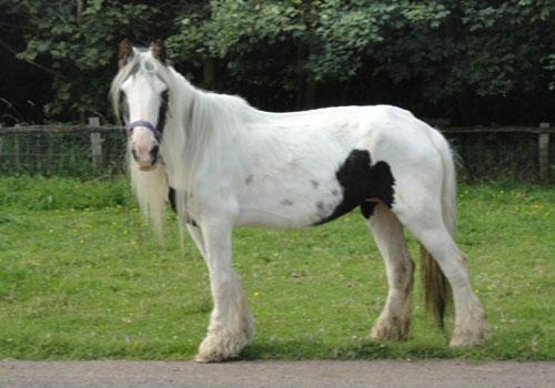Horse and Donkey Sanctuary