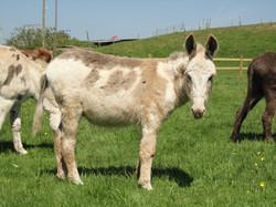 Billy Wilson Donkey Sanctuary