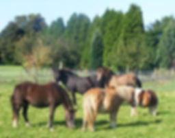 The Horse Sanctuary Tettenhall