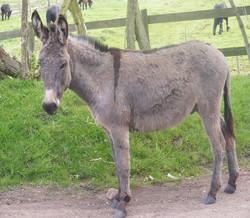 Tettenhall Horse Sanctuary