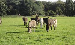 Donkey Sanctuary Wolverhampton