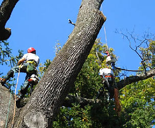 Tree Removal | Corpus Christy | The Hisey Company