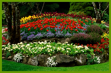 Hisey Company Landscape Cedar Park