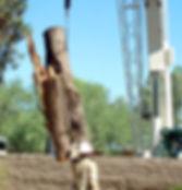 Lakeway Tree Service Hisey Company Tree Removal