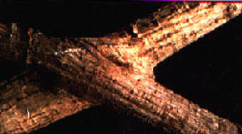 Hisey Company Root Graph Matthew Hisey